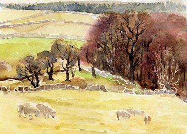 Sheep Spottiswood